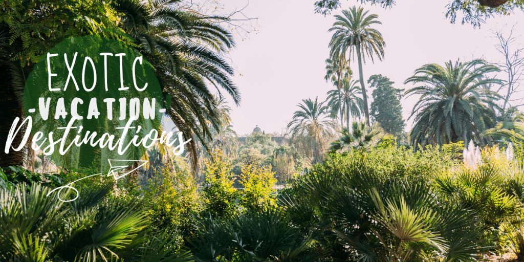 """Image of palm trees in a rainforest with the text """"exotic vacation destinations"""" signifying some of the most unique travel destinations in the world"""